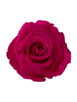 Rose stabilisée Fuschia M