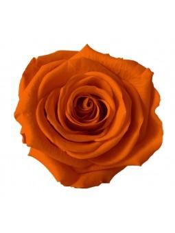Rose stabilisée Orange M