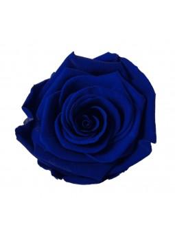 Rose Stabilisée Bleu Royal M