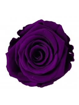 Rose stabilisée Violet M 6cm